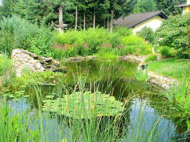 Naturteich - Gartengestaltung Frank Klemt