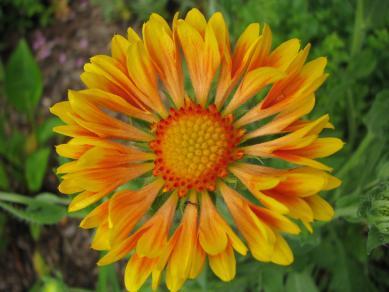 Blüte - Gartengestaltung Frank Klemt