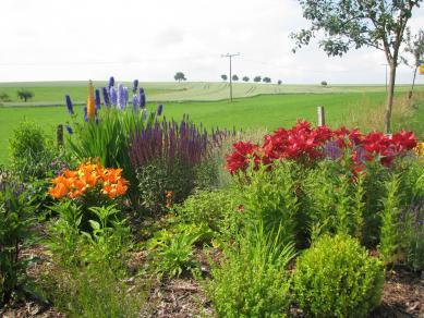 Planzung  - Gartengestaltung Frank Klemt