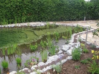 Schwimmteich mit Einsteig - Gartengestaltung Frank Klemt